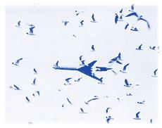 Руководство по орнитологическому обеспечению полётов в гражданской авиации